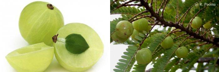 vitaminy-ot-sediny-volos-kakogo-vitamina-ne-hvataet12
