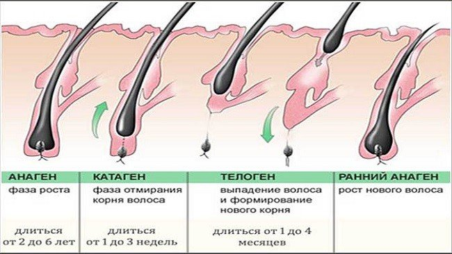 kak-otrastit-resnicy-v-domashnih-usloviyah-ehffektivnye-metody2