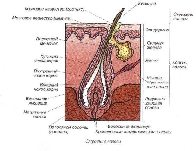 uvlazhnyayushchie-masla-i-maski-dlya-volos2